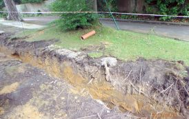 Business fined £2,000 for damaging tree roots