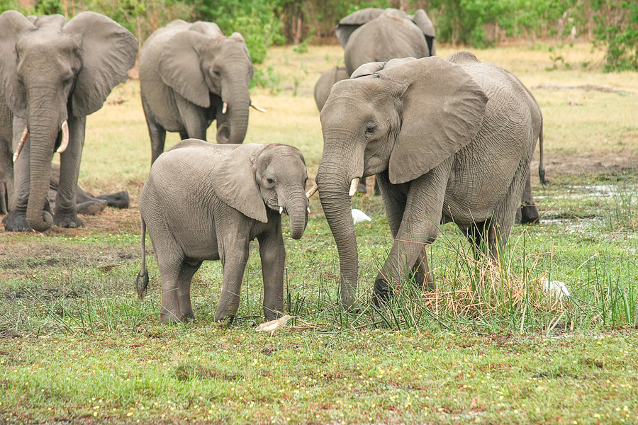 'Banning ivory sales will help leave our planet in a better state'